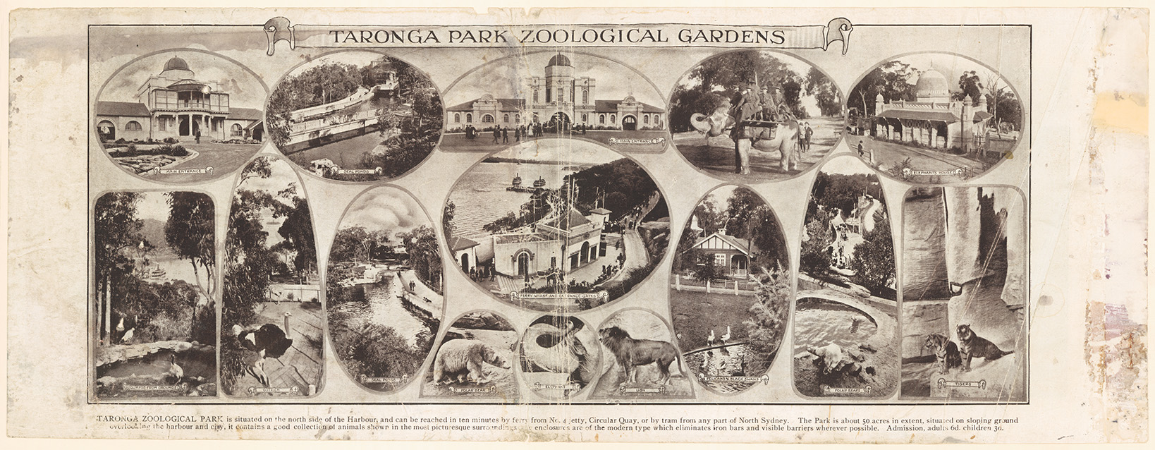 Taronga Park Zoological Gardens, H Phillip, c.1917. From NRS 20499